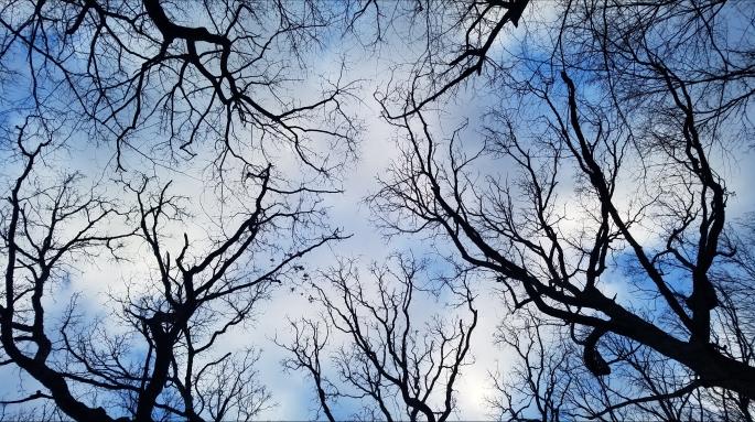 sky-blue-trees-e1524105451840.jpg