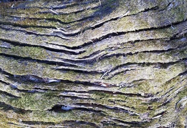 textured-bark.jpg